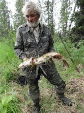 Photo: А вот и щучка - Волк увидел ее в воде и бросил блесну. 60см!