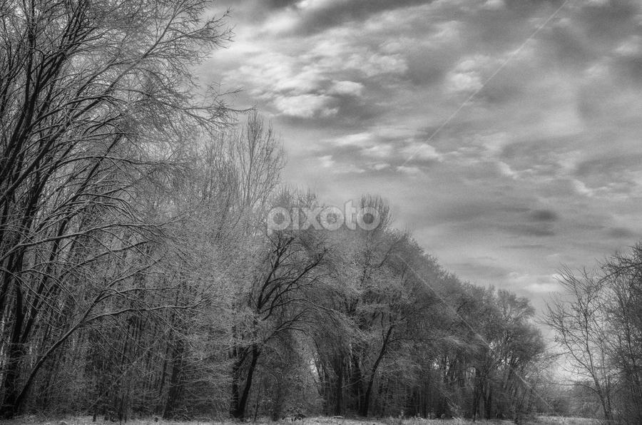 Winter by Attila Bódi - Landscapes Forests ( clouds, monochrome, black and white, white, forest, frozen, landscape, winter, tree, freeze, ice, snow, cloud, trees, black, b and w, b&w, monotone, mono-tone )