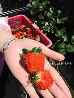 依虹高架草莓園