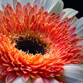 Flower by Benyamin Kristiawan - Nature Up Close Flowers - 2011-2013 ( sexy, awesome, beauty flower, flower,  )