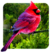 3D birds parallax live wallpaper APK for Ubuntu