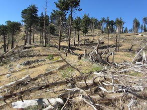 Photo: View north on Hawkins Ridge toward Sadie Hawkins. Picking a route veering right