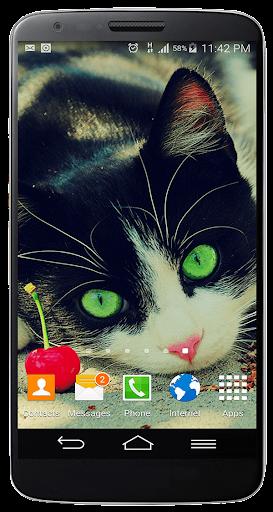 かわいいキティ猫の画面のロック