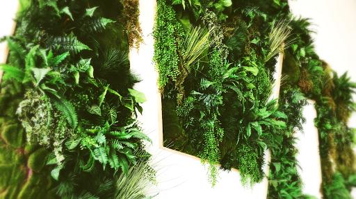 mur_végétal