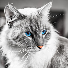 cat by Joseph Martinez - Animals - Cats Portraits ( cat, nikonshooter, feline, nikon, animal )