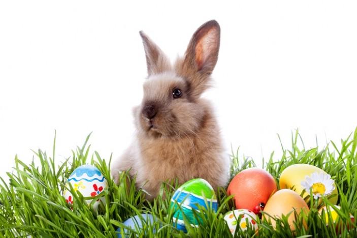 Velikonoční králíček s malovanými vajíčky