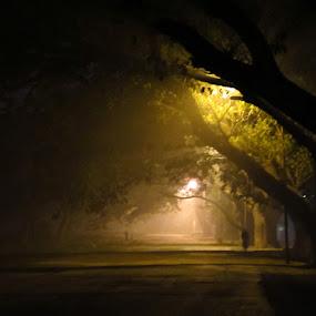 The Mist by Arnab Choudhury - City,  Street & Park  Street Scenes