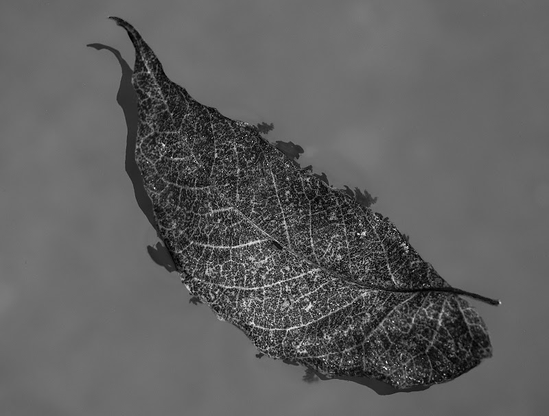 Leaf di Giovanni Coste
