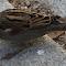 sparrow_eating.jpg