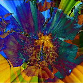 Flower by Věra Blechová - Illustration Abstract & Patterns