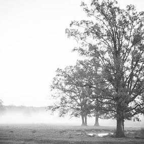 by Beth Krzes - Black & White Landscapes ( farm, pasture,  )