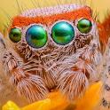 Orange Spider LWP icon