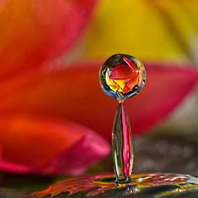 Plumeria Splash by Margie MacPherson - Nature Up Close Natural Waterdrops