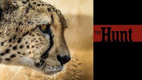 The Hunt thumbnail