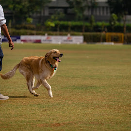 Faithful  by Prithviraj Shetty - Animals - Dogs Playing ( dogs animal pets canon faithful )