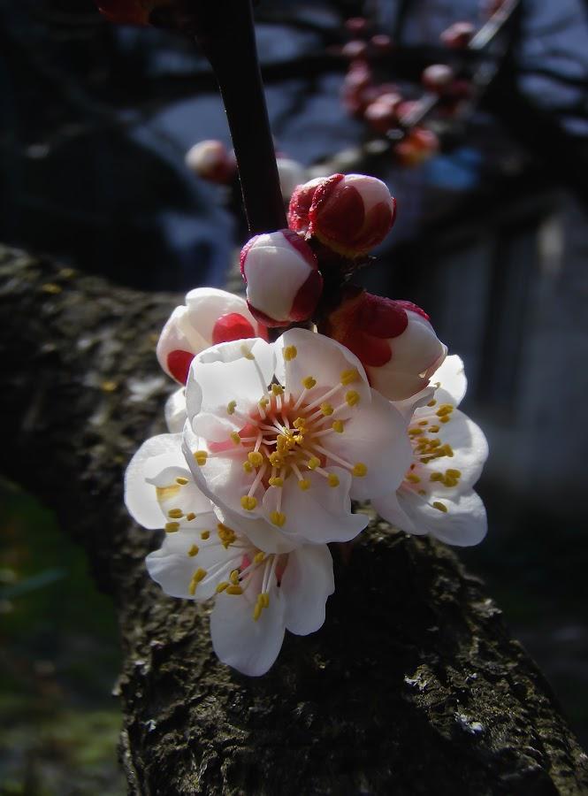 soft touch by Mirela Korolija - Nature Up Close Flowers - 2011-2013