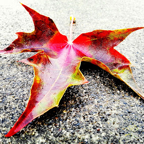 loan leaf by Todd Reynolds - Instagram & Mobile Android ( , fall, color, colorful, nature )