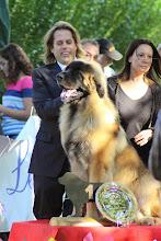 Photo: Uspeh Iz Galkina Gnezda, son Handler et la juge Stéfania Bonati