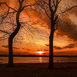 Between the Trees by Linda Karlin - Landscapes Sunsets & Sunrises ( sunset, silhouette, clouds, trees, landscape,  )