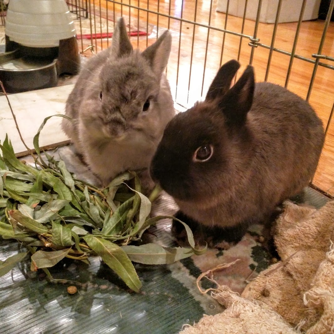Squishy and Squishette eating willow