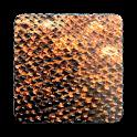 Komodo 11 Chess Engine icon
