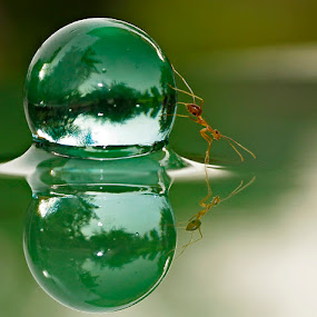 Marblant by Teguh Santosa - Animals Insects & Spiders
