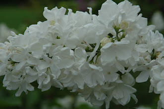 Photo: Flora