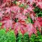 Leaf35181910.jpg