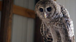 Owl in the Family thumbnail