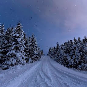 Winter road by Ruslan Stepanov - Landscapes Forests ( clouds, iceland, sky, winter, stars, snow, trees, night, road,  )