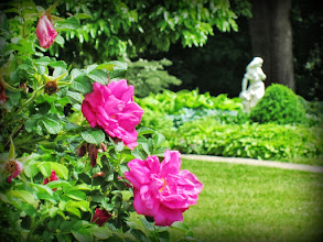 Photo: Pink roses in front of a statue of a woman at Wegerzyn Gardens Metropark in Dayton, Ohio.