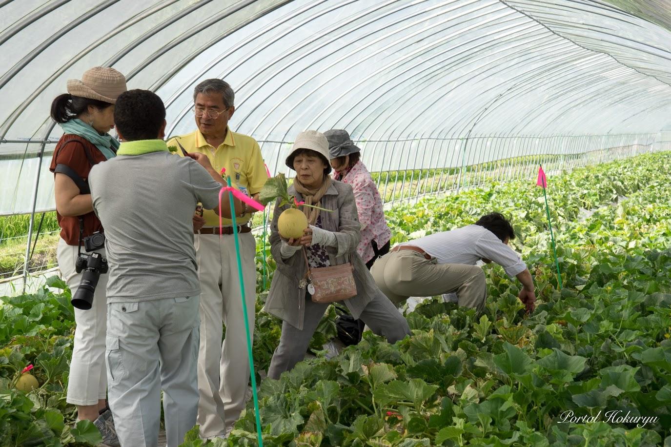 佐野豊町長も、人生で初めてのメロン収穫