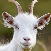 الماعز الهيجان محاكاة - الحياة البرية