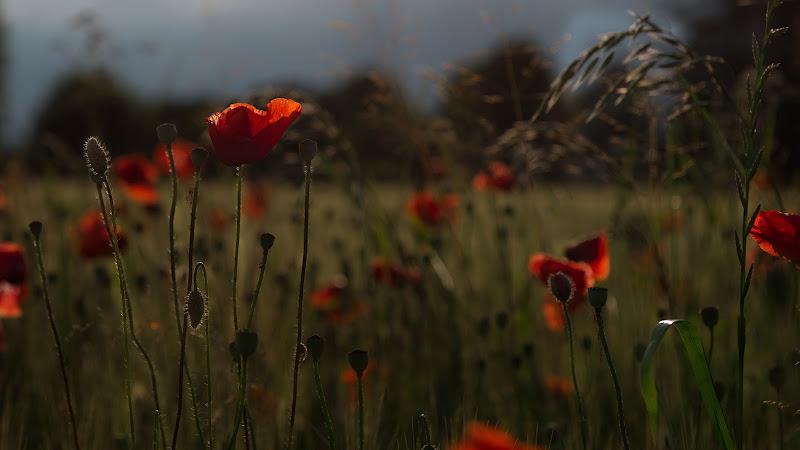 Red summer  di Matteo Faliero
