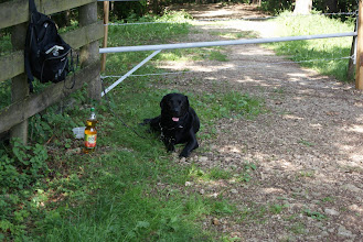 Photo: Niki bewacht Monty und den Repeaterstandort