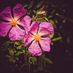 Geni flowers.jpg