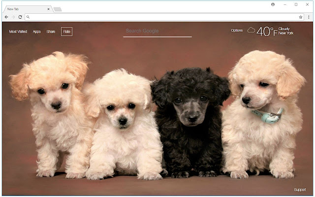 Poodle Wallpaper Cute Dogs New Tab Themes