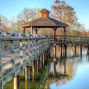 Pier Perching by Shaun Poston - City,  Street & Park  City Parks ( lafreniere park, shaun poston, metairie, nature, louisiana, seagulls, perching, walk )