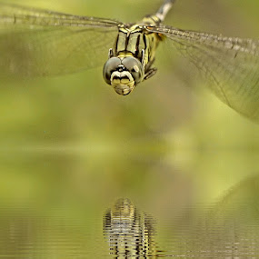 by Yoce Mocodompis - Animals Insects & Spiders