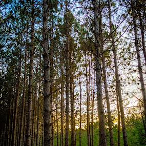 Twilight in Paris (Michigan) by Chris Mowers - Landscapes Forests ( michigan, paris, hdr, twilight, trees )