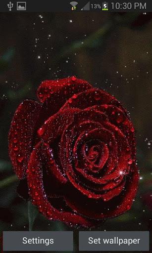 免費下載個人化APP|Red Rose Magic LWP app開箱文|APP開箱王