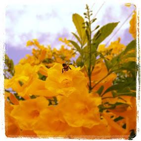 #bee #flower #honduras #statigram #nature by Jace LeRoy - Instagram & Mobile Instagram