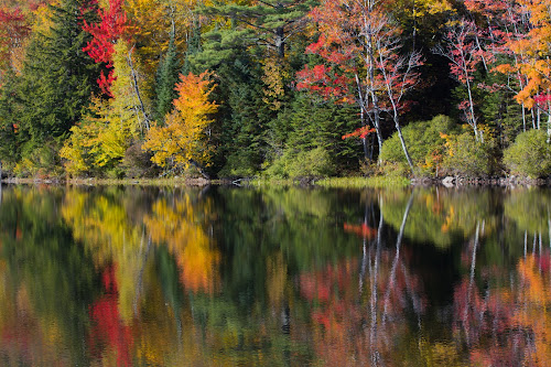 Morning Bright by Ron Kreml - Landscapes Forests ( amazing, red, nature, color, oeaceful, trees, yellow, leaves,  )
