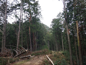 林道を高みへ