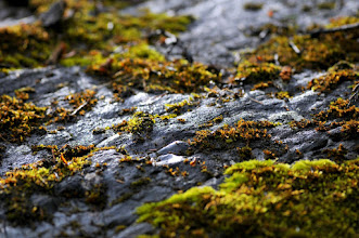 Photo: Moss on rock