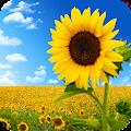 Sunflower Wallpaper Best HD APK