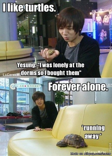 yesung turtles