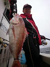 Photo: いいサイズの真鯛キャッチでした!