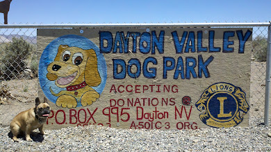 Photo: Bear at the Dayton Valley Dog Park