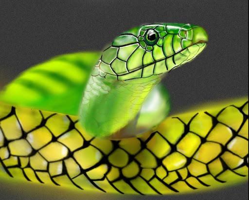 無料个人化Appのヘビの壁紙|記事Game